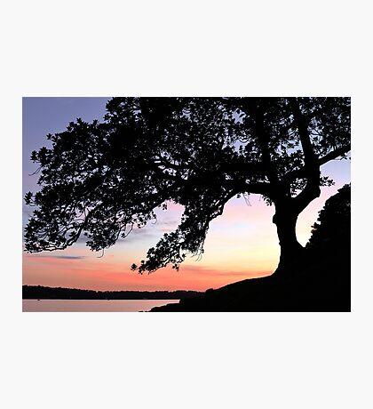 Fig Tree Silhouette Photographic Print