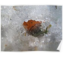 Leaf has ice around Poster