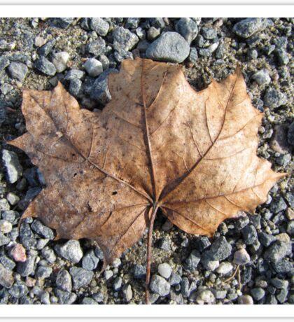 Found a fine leaf right on gravel road Sticker