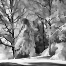 Winter Abstract in B&W by Tom  Reynen