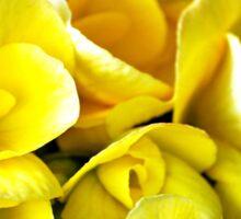 Yellow Begonias Sticker