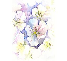Cherry Blossoms Watercolor Photographic Print