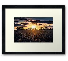 Sunset over Fields of Barley Framed Print