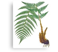 TIR-Fern Canvas Print