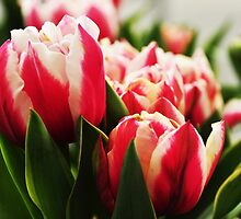 Spring fever.... by Poete100