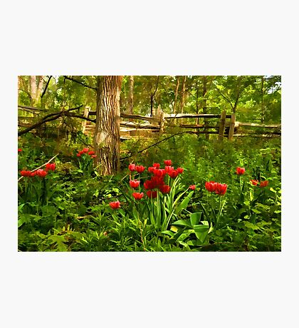 Untamed Tulip Forest - Impressions Of Spring Photographic Print