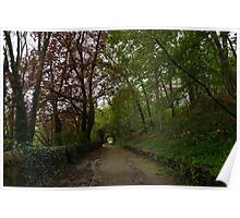 Spring Forest With Tulips Poster