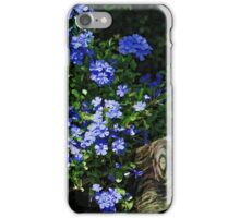 Plumbago On A Fence  iPhone Case/Skin