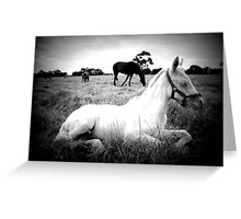 Ghost Foal Greeting Card