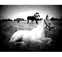 Ghost Foal Photographic Print