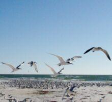 A Sea of Gulls Sticker