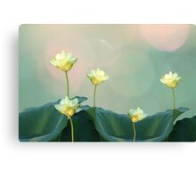 Serene Dreamy Lotus Pads Soft White Water Lilies Canvas Print