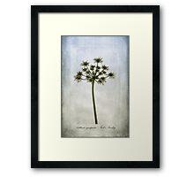Aethusa cynapium Framed Print
