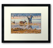 Antelope in the water Framed Print