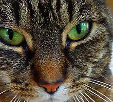 My cat miepje by entastictreeman