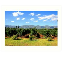 Western Cape Province Vineyard - Route 62, South Africa Art Print