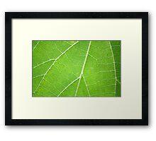 Green Veins - Margaret River, WA Framed Print