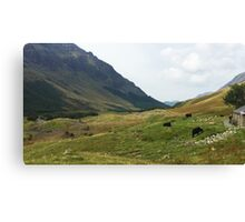 Cattle at Black Sail Hut, Ennerdale, Cumbria, UK Canvas Print