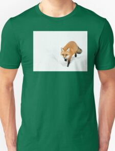 Red Fox - Algonquin Park T-Shirt