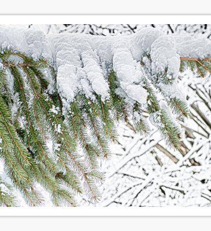Snowy Pine - HDR Sticker