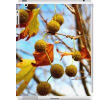 AutumnTree - Margaret River, WA iPad Case/Skin