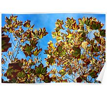Coloured Autumn Leaves - Margaret River, Western Australia Poster