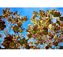Coloured Autumn Leaves Photographic Print