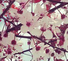 Spring - pink flowers Sticker