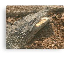 Crocodile Animals Reptiles Canvas Print