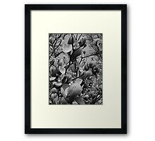 Spring in black and white..in a brave new world Framed Print