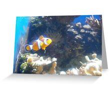 Clown Fish Nemo Finding Nemo Greeting Card