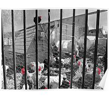 Red-Hatted Chickens Poster