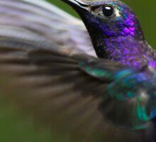 Humming bird Sticker