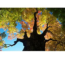 Tree of Awesome Photographic Print
