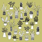 Cacti by Nic Squirrell