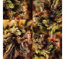 Macro Marijuana  Photographic Print