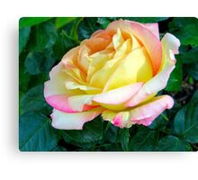A Rose for All Women Canvas Print
