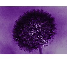 Dandelion in Goth Photographic Print