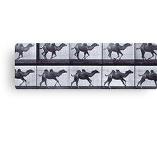 Muybridge - Camel in motion Canvas Print
