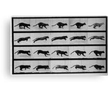 Muybridge Study - Cat Leaping Canvas Print