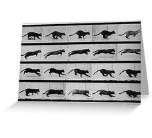 Muybridge Study - Cat Leaping Greeting Card