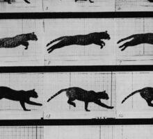Muybridge Study - Cat Leaping Sticker