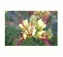 Mexican Yellow Bird of Paradise with Pink Pistil Art Print