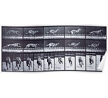 Muybridge - Photographic Study of Dogs in Motion Poster