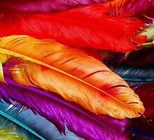 Feathers by capricedefille