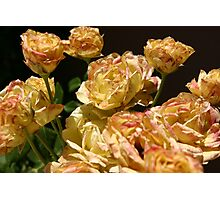 Dirty Yellow Roses Photographic Print