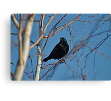 Black bird, blue sky Canvas Print