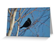 Black bird, blue sky Greeting Card