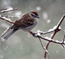 Snowy Spring Sparrow Sticker