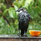 For food - I'll come out in any weather......! by Roy  Massicks